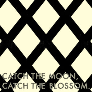 CAECH THE MOON,CATCH THE BLOSSOM.